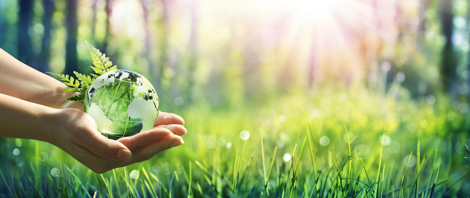 Klimaneutrale Beratungsdienstleistungen